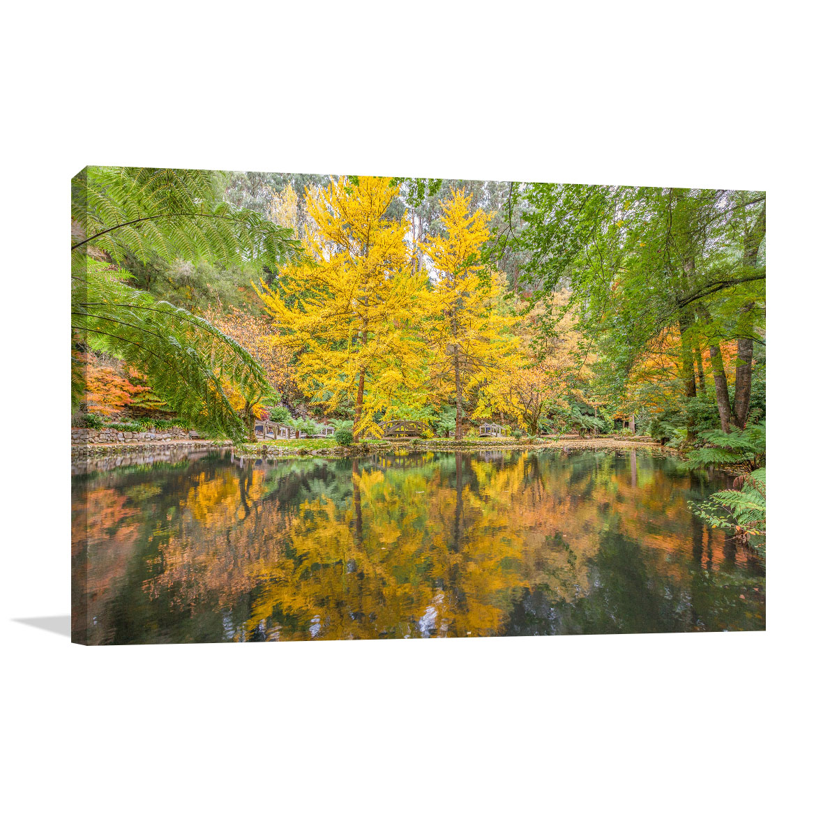 Melbourne Art Print Dandenong Ponds and Trees