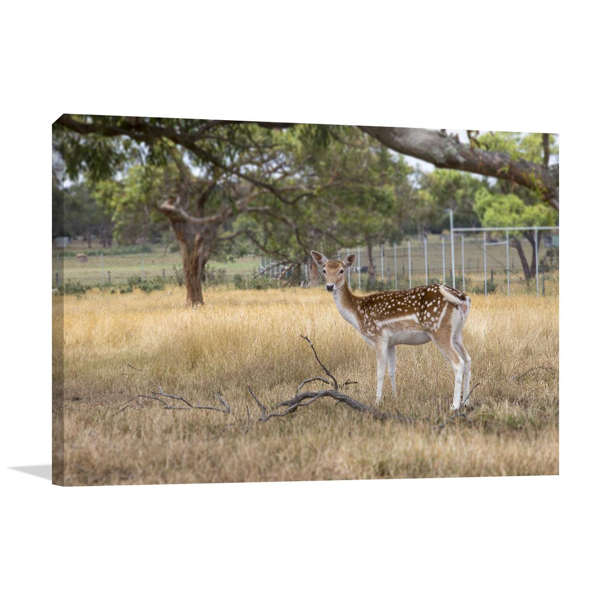 Melbourne Art Print Deer Park