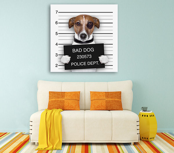 Mugshot Of Dog Canvas Prints