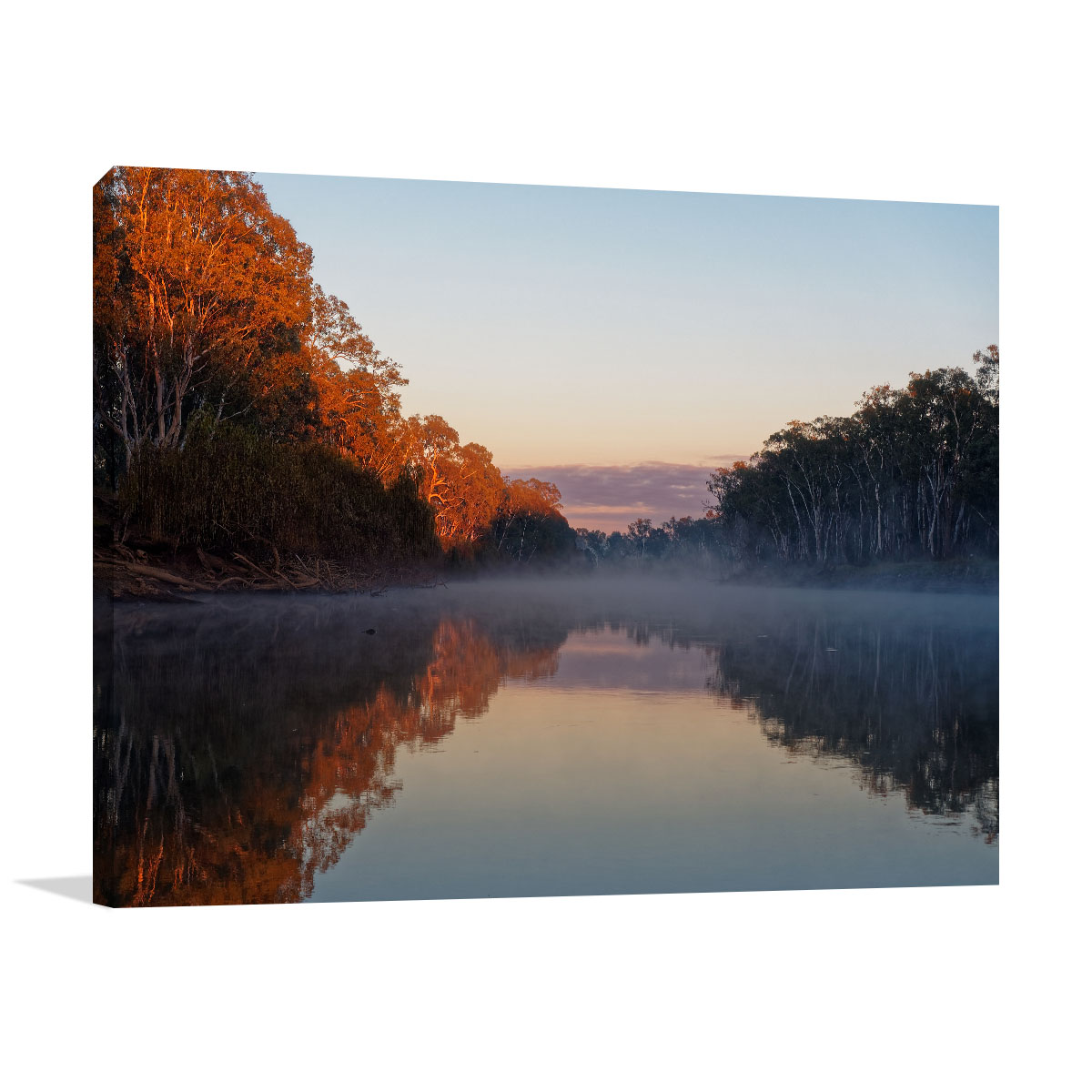 Murray River Art  Print Early Morning