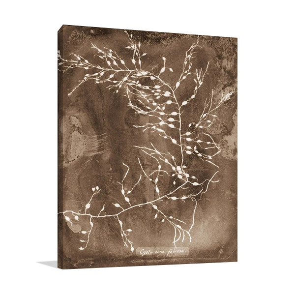 Natural Forms Sepia Print on Canvas