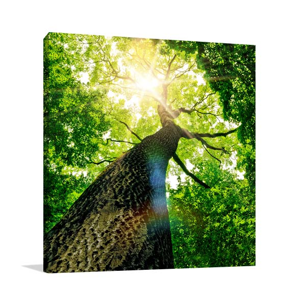 Nature Green Sunlight Prints Canvas