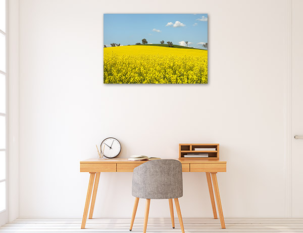 New South Wales Canvas Print Cootamundra Canola Wall Art