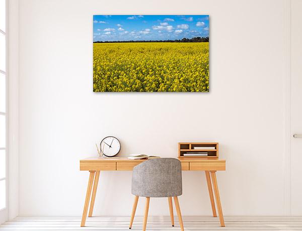 New South Wales Canvas Print Narromine Canola Field Wall Art