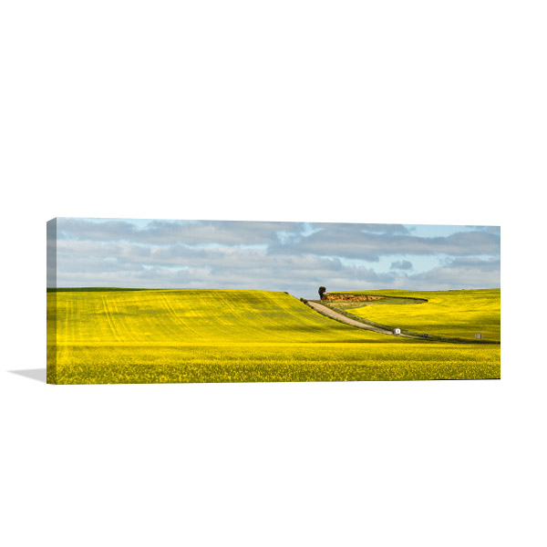 New South Wales Wall Art Print Canola Hay Artwork Picture