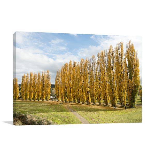 New South Wales Wall Print Cooma Poplar Trees Canvas Artwork