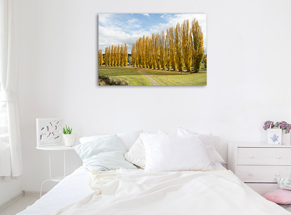 New South Wales Wall Print Cooma Poplar Trees Artwork Photo
