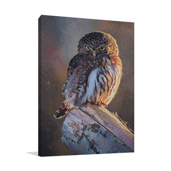 Northern Pygmy Owl Wall Art Print