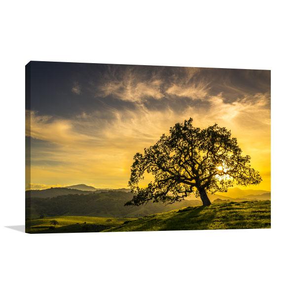 Oak Tree Sunset Art Prints