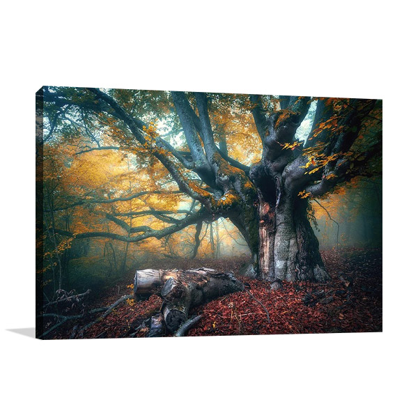 Old Fairy Tree Wall Canvas Print