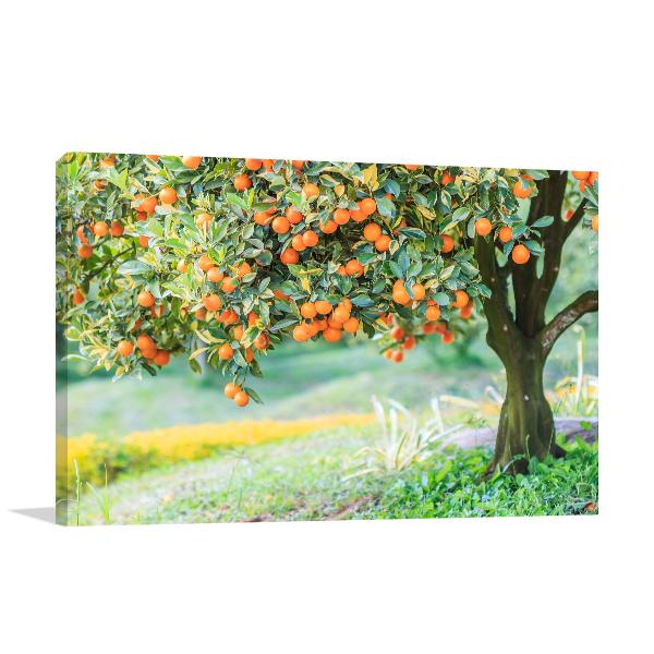 Orange Tree Prints Canvas