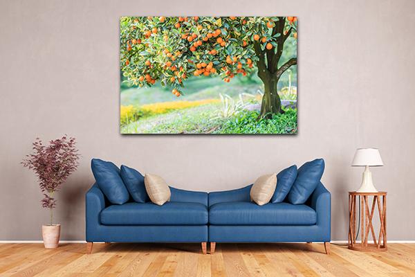 Orange Tree Canvas Prints