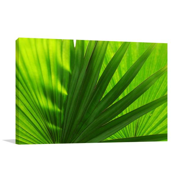 Palm Leaves Close-Up Canvas Art