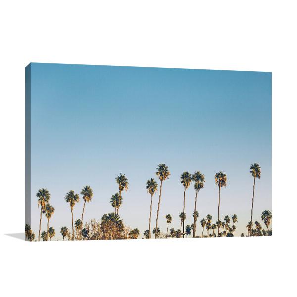 Palm on the Blue Sky Photo Wall Arts