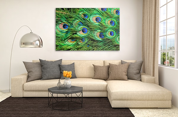 Peacock Feathers Art Print Wall Art