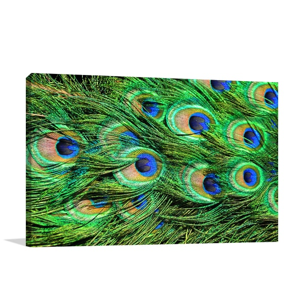 Peacock Feathers Art Print Prints Canvas
