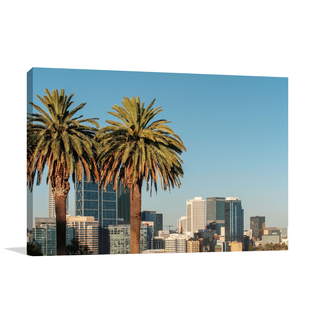 Perth Art Print Palm Trees at Golden Hour
