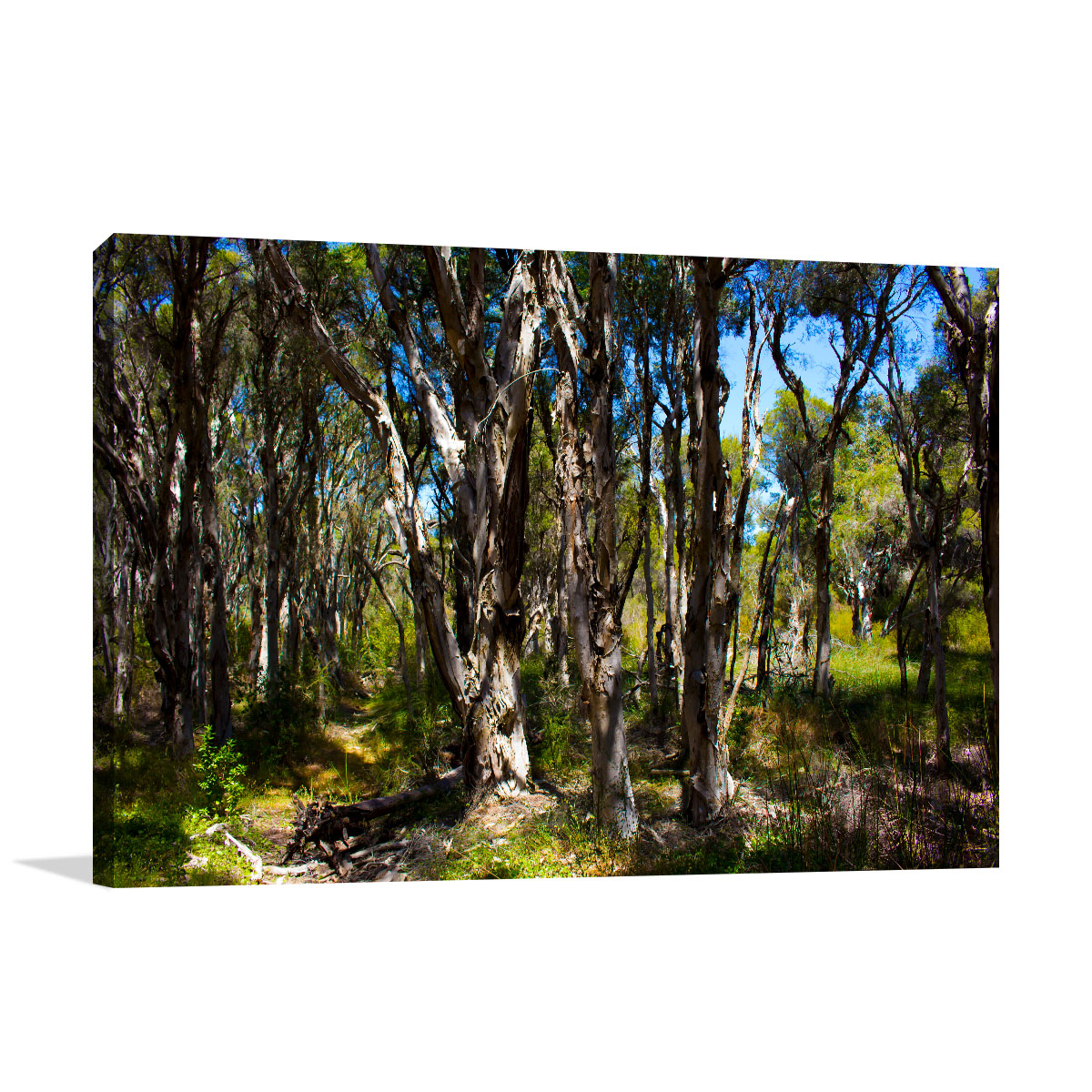 Perth Art Print Piney Lakes