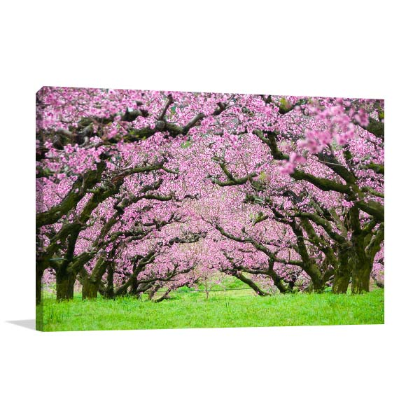 Pink Flowers Trees Tunnel Canvas Art