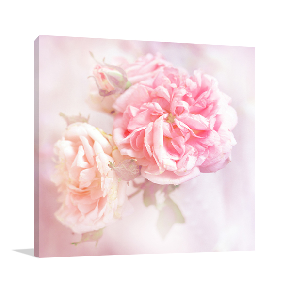 Pink Roses Canvas Art Prints
