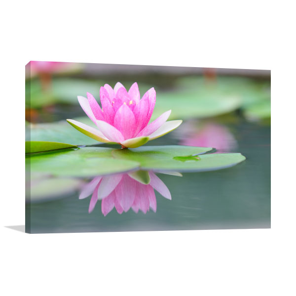 Pink Water Lily Canvas Art