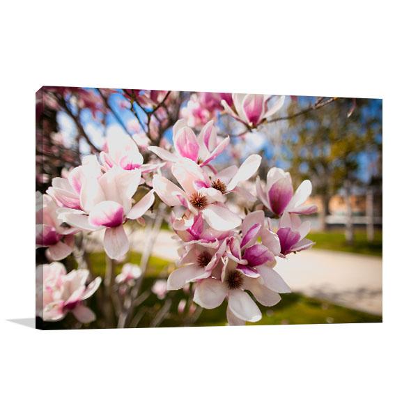 Purple Magnolia Flowers Wall Art