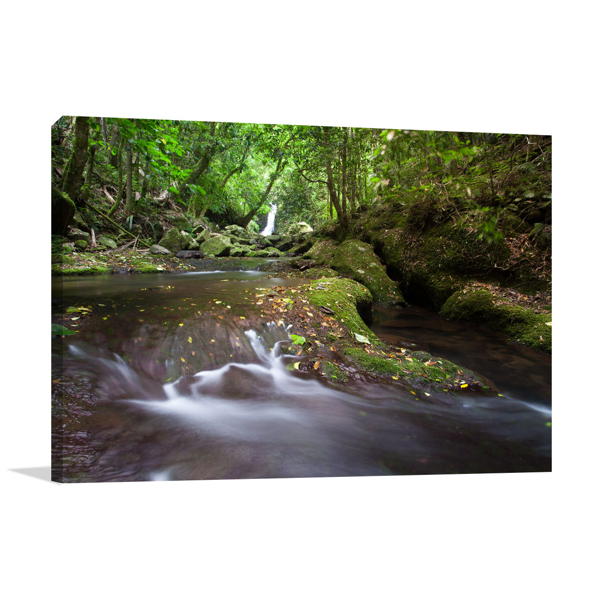 Queensland Art Print Coomera River