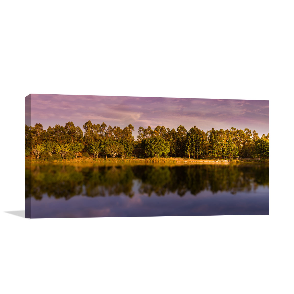 Queensland Art Print Early Morning Springfield