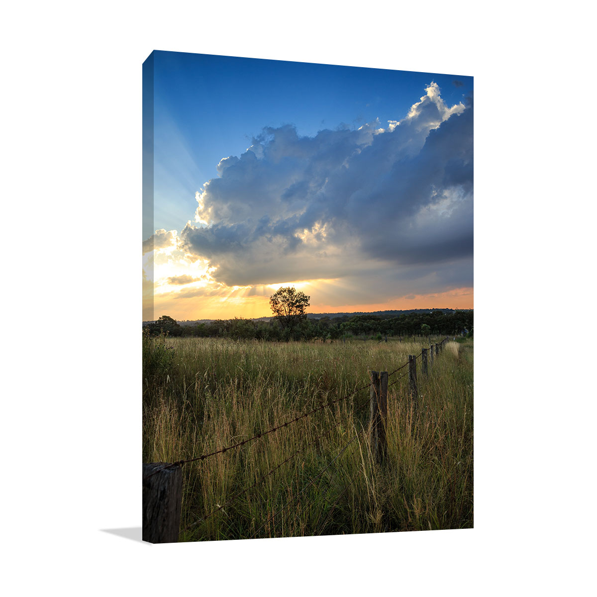 Queensland Art Print Girraween Sunset