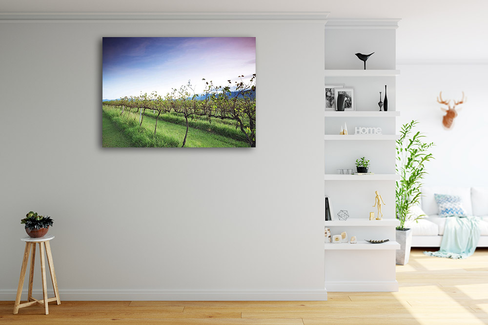 Rural Vineyard Photography Print on Canvas