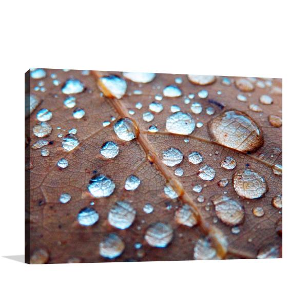 Rain Drops On Oak Prints Canvas