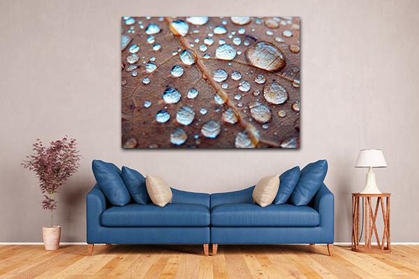 Rain Drops On Oak Canvas Prints