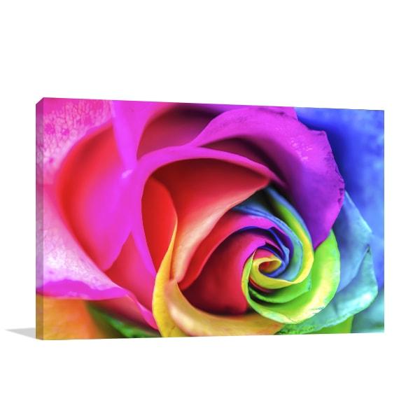 Rainbow Rose Canvas Art Prints
