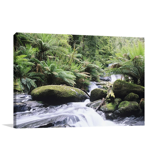Rainforest Queensland Australia Print