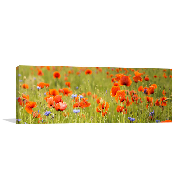 Red Wild Poppies Art Prints