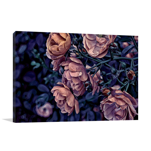 Rose in Garden Photo Wall Arts