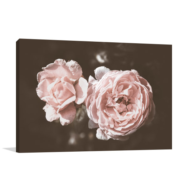 Rose in Warm Tones Canvas Photo