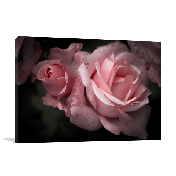 Roses in Spring Wall Art Photo Print