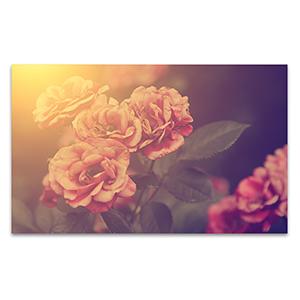Roses Wall Art Print
