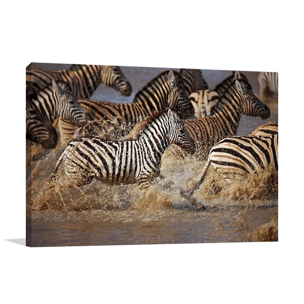 Running Zebras Print on Canvas