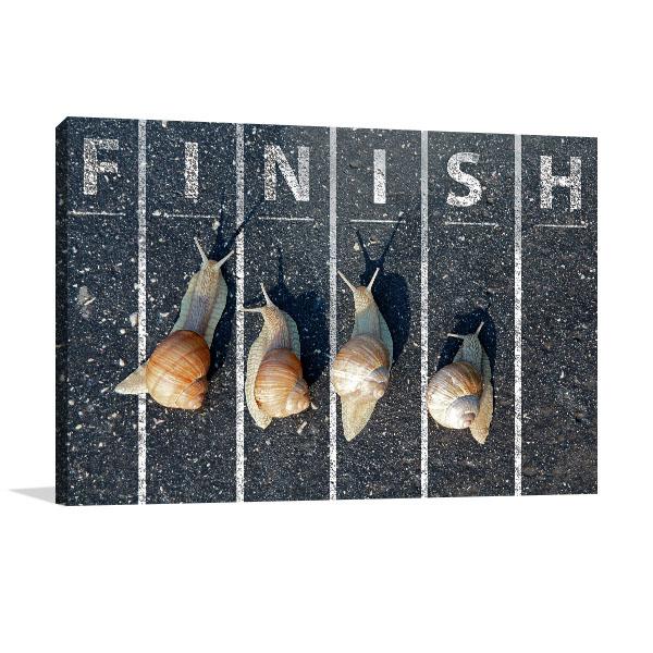 Snail At Finish Line Canvas Prints