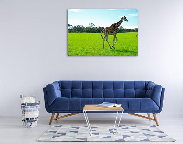 South Australia Wall Art Monarto Zoo Giraffe Picture Print