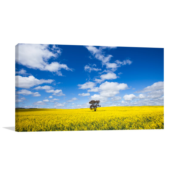 South Australia Wall Art Print Clare Valley Canola Picture Artwork