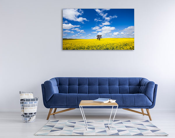 South Australia Wall Art Print Clare Valley Canola Photo Canvas