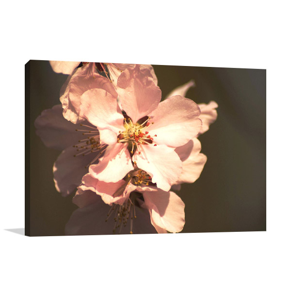 Spring Blossom Picture Artwork