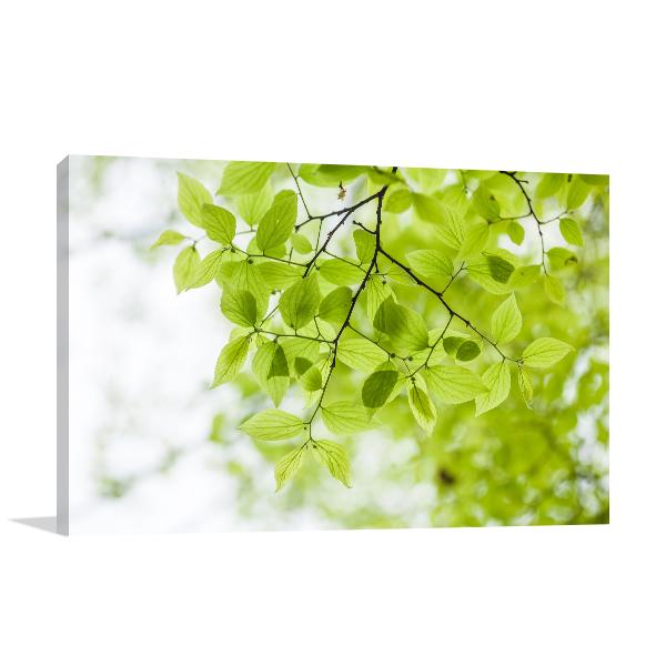 Spring Tree Canvas Art Prints