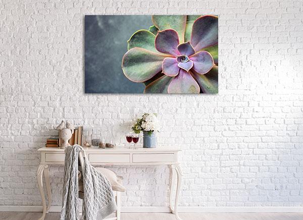 Succulent Echeveria Canvas Prints