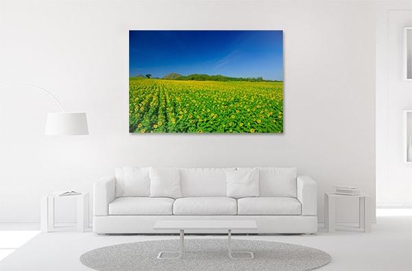 Sunflower Garden Prints Canvas