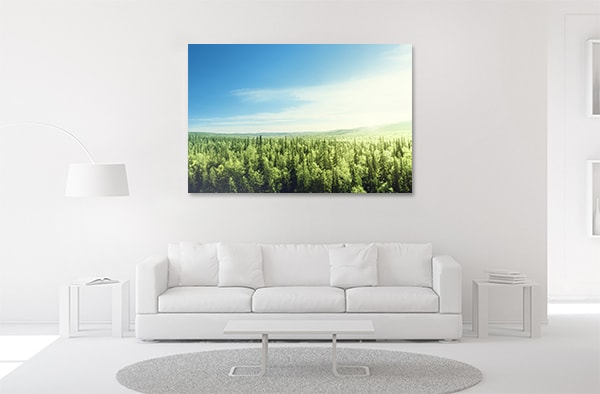 Sunset in Forest Prints Canvas