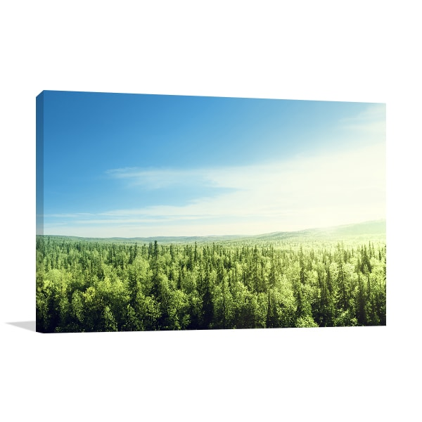 Sunset in Forest Canvas Prints